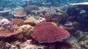 Terry Maple Coral Reefs