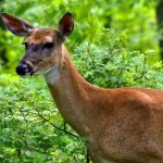 Did the Shutdown Revitalize Wildlife?